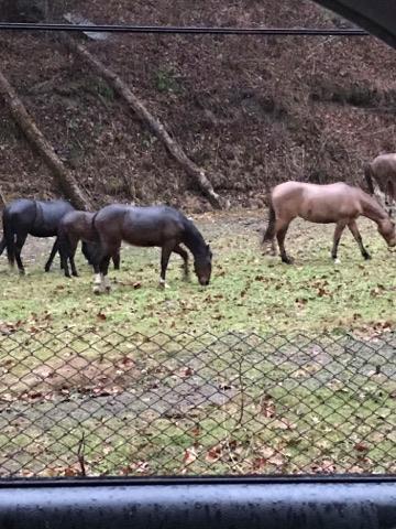 boonecountyhorses1
