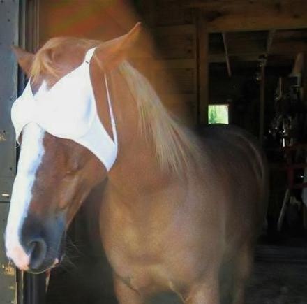 horse in bra