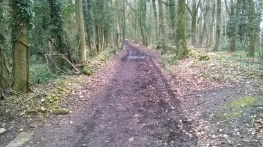 20160308 Standish wood Cotswold Way 1