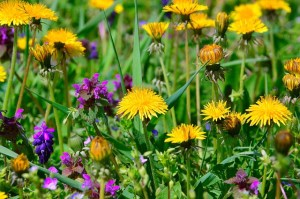 What dandelions can teach you about your relationship