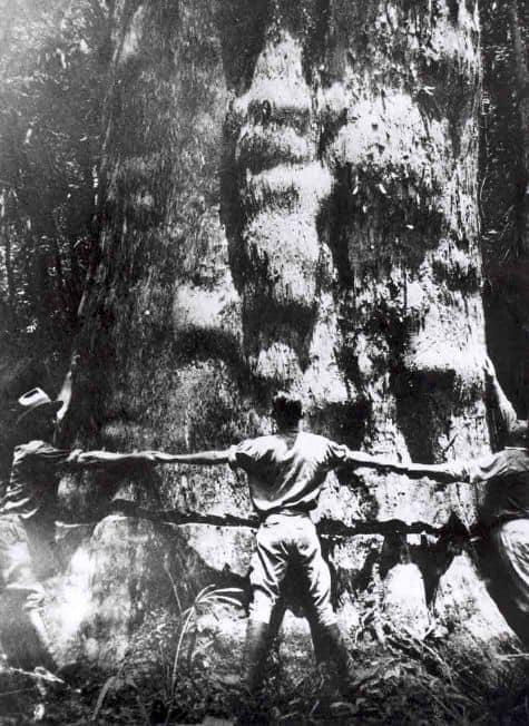 History of Goodwin Woods Wood Flooring