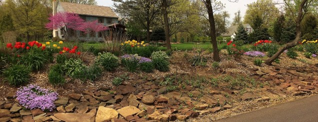 Rock garden with tulips & other flowering plants