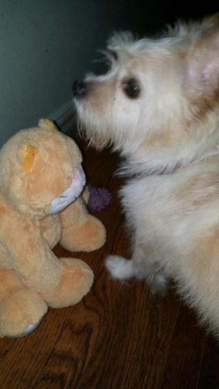 toby white terrier 2