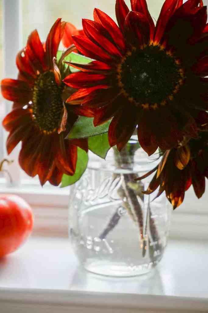 chianti sunflowers in mason jar
