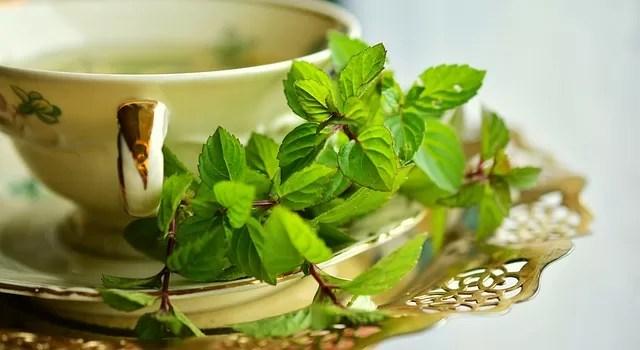 green tea good for health