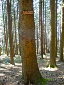 This tree, specifically, reminded me of good ol' Big Sandy... activity trees, anyone? Pines on the mind