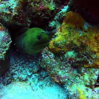 Green Moray Eel | heartStories fear and the night dive