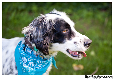 dog-pet-photography-spca-5