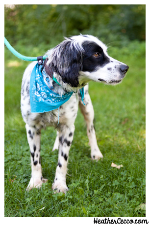 dog-pet-photography-spca-6