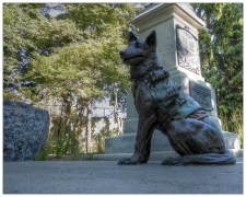 A life-sized bronze dog sits in the centre of the tribute outfitted with a medical Red Cross backpack that dogs used in the First World War. The footprints of dogs, horses and mules are stamped into concrete leading up to the monument. Photograph By Gordon Bell.