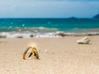Honeymoon on tropical island, two wedding rings on the ...