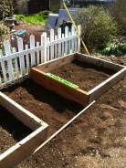 Two raised beds made of wood being leveled on freshly dug dirt.