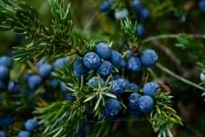 Top 10 Benefits of Blueberries #HeatherEarles #herbnwisdom #blueberries #healthysnacks #memory