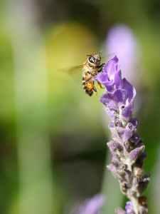 Thyme uses for the garden #heatherearles #herbnwisdom #naturalliving #saladdressings #podcaster #author #healthblogger #detoxingdrinks #drinks