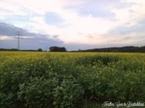 sunday pics4