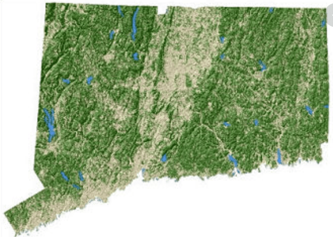Connecticut forests
