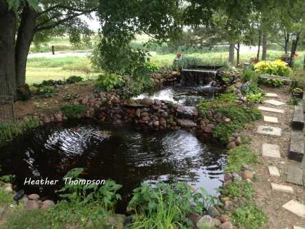 garden 2013 3
