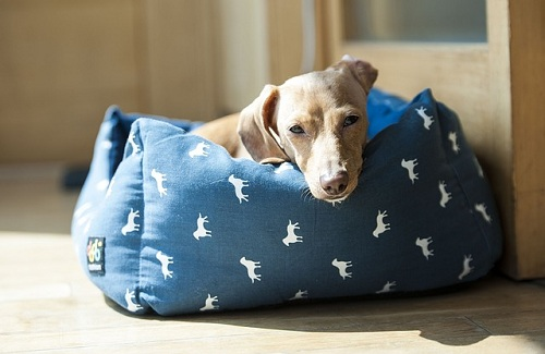 dog lying down on a dog bed
