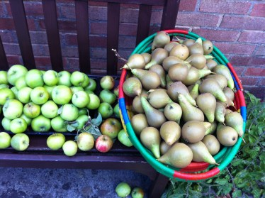 A glut of pears too