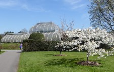 kew blossom and glass house 4