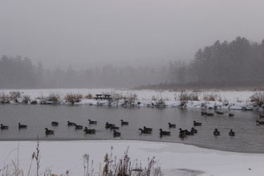 Winter Birds & Scenery