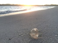 My little Jellyfish friend xx