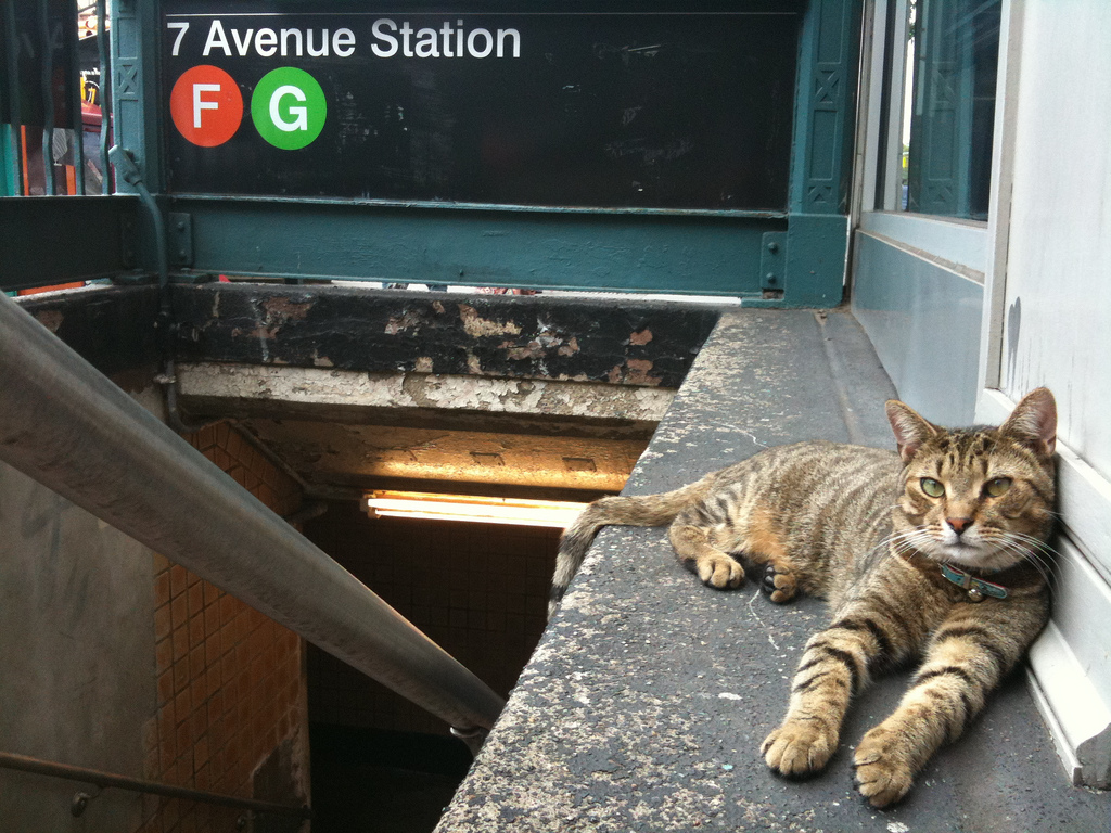subway cat