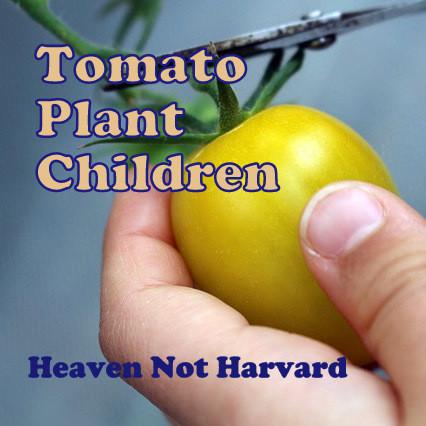 Tomato Plant Children