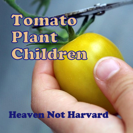 We can tend the soil, nurture the shoots, but we can't always see the storms looming in the distance. Tomato Plant Children - Heaven Not Harvard