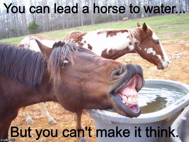 horse5