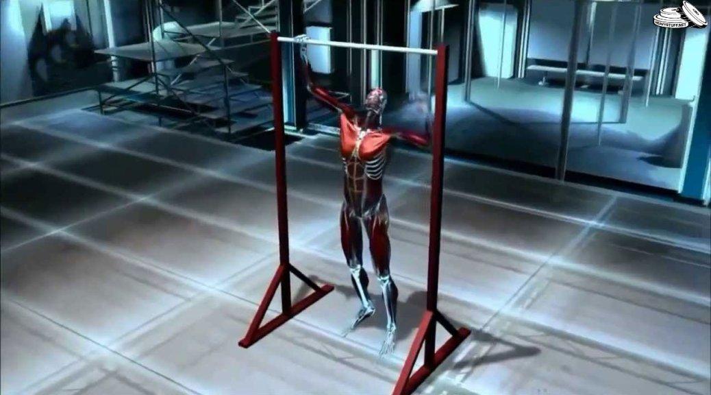 Как мышцы растут