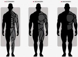 Соматипы - типы телосложения
