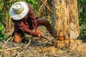 חוטב עצים ביער