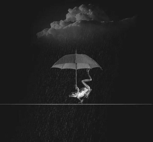 צפרדע מחזיקה מטריה