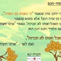 כי האדם עץ השדה - תלמיד חכם