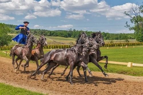 אדם רוכב על סוסים
