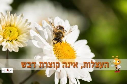 העצלות אינה קוצרת דבש