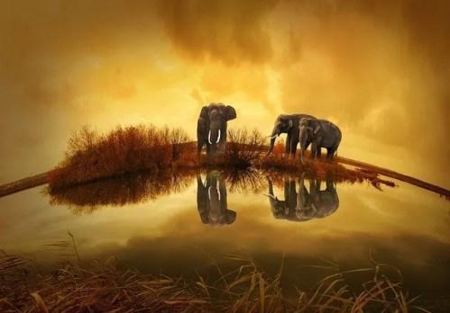 הרואה פיל בחלום פלאות נעשו לו | פרשת פנחס פנינה יומית
