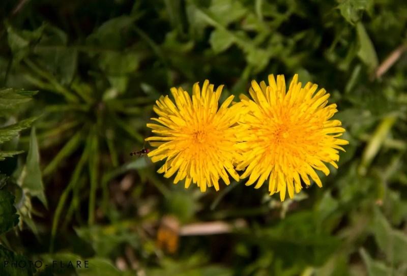 פרחים באלסקה