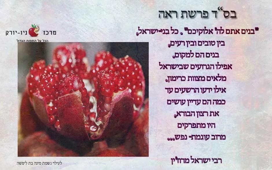בנים אתם לה' אלוקיכם – פירוש של הרבי ישראל מרוז'ין