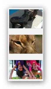סיקס פלאגס וגן החיות