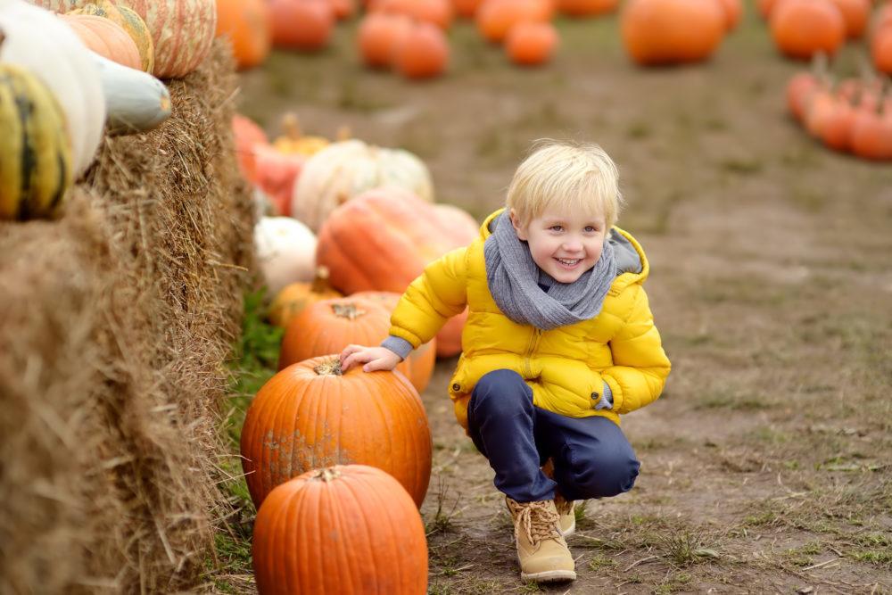 Fall Activities Heber Valley Events
