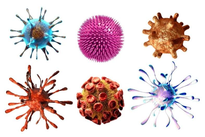Qué son los microorganismos