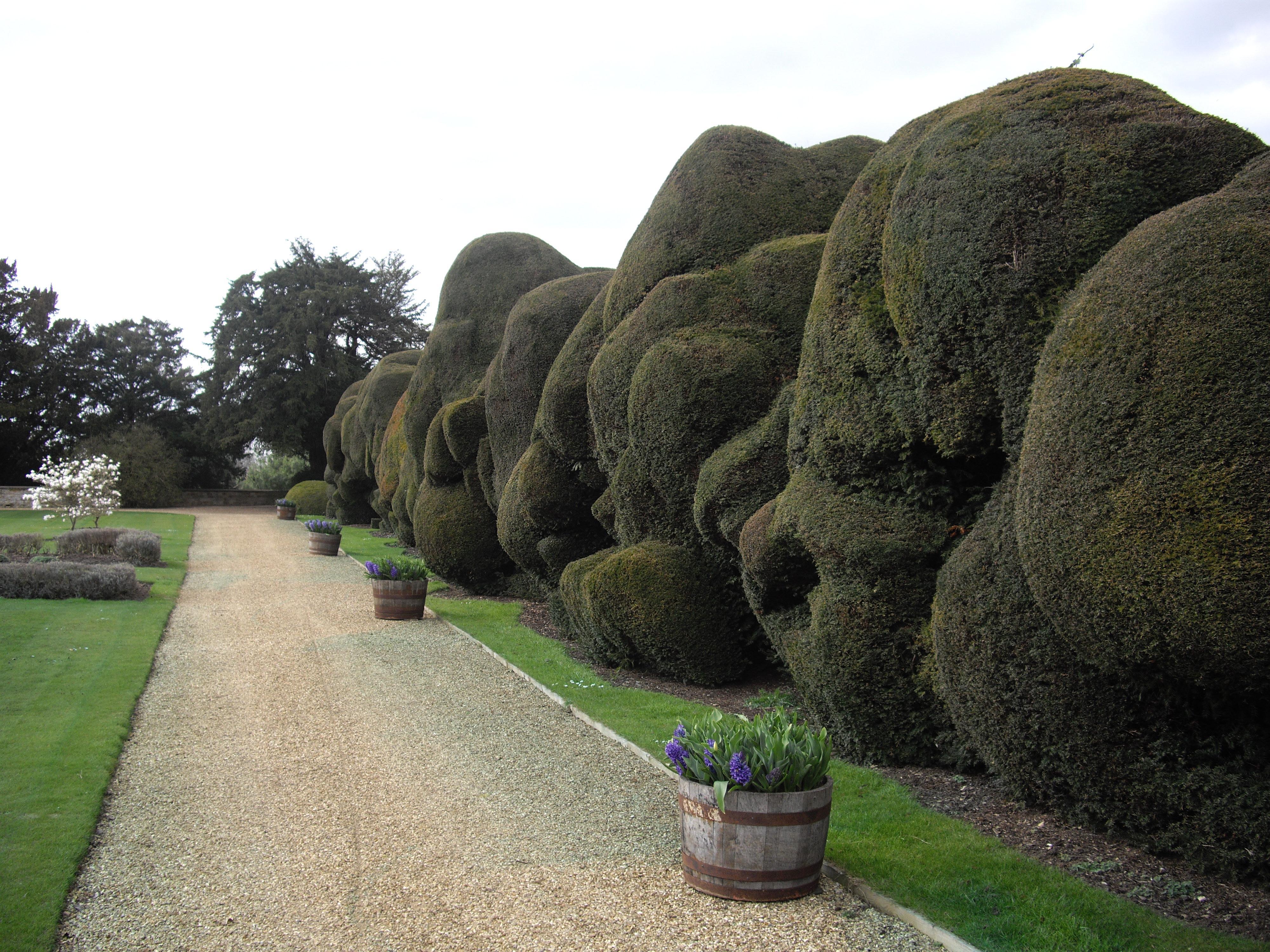 Notable Hedges Hedge Britannia