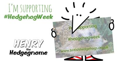 Children's books   Henry the Hedgegnome   I'm supporting Hedgehog week