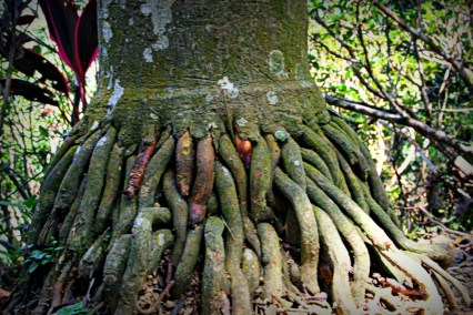This tree's roots were so strange.