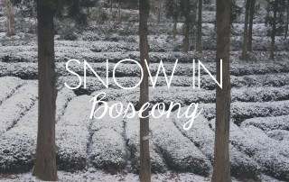 Snow in Boseong // KOREA