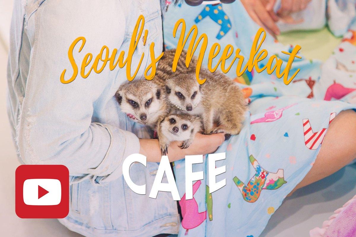 Seoul // MEERKAT CAFE
