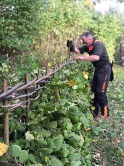 Hedgelaying Training Courses
