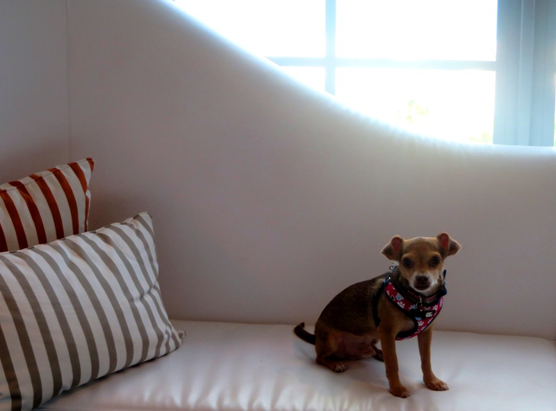 Pet Friendly Miami Vacation - SLS South Beach – chaise